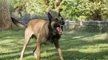 כלבים תוקפניים במגדיאל