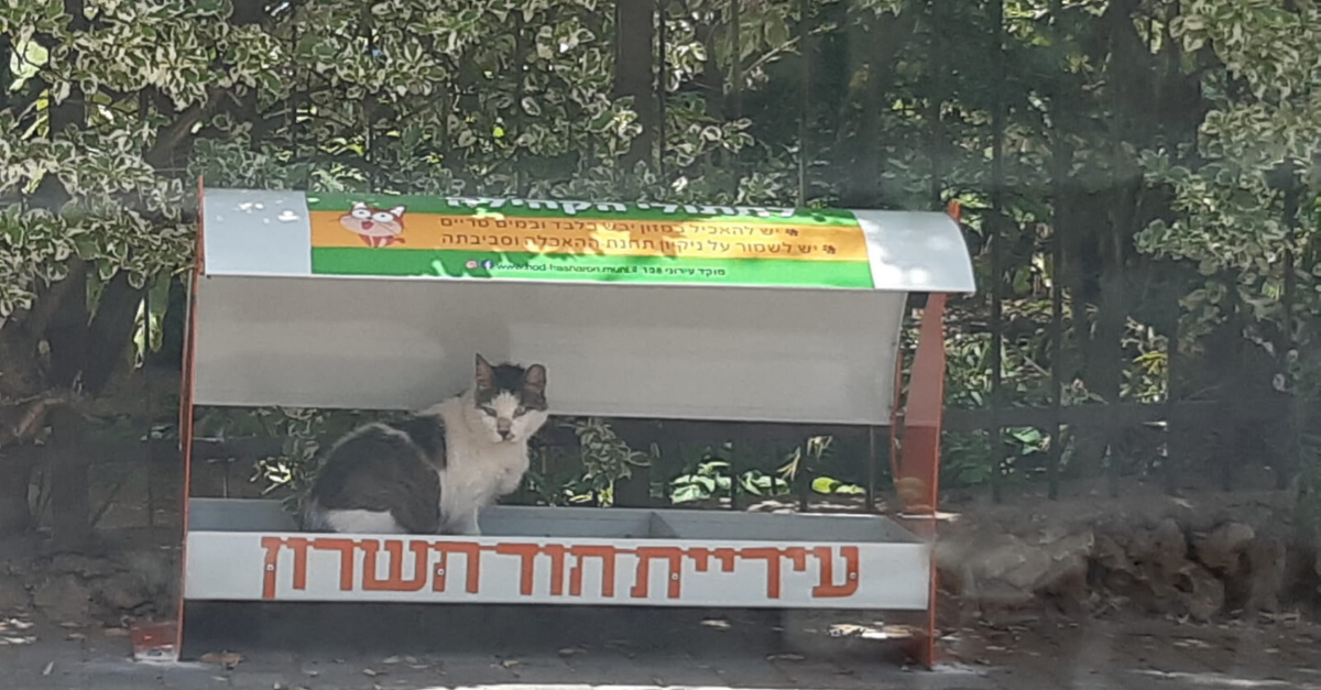 תחנת האכלה לחתולים בהוד השרון