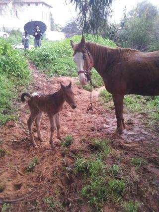 סוסים בחווה. אין להם לאן ללכת. צילום: באדיבות משפחת לוינסון