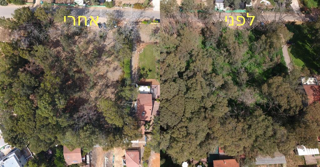 החורשה ברחוב אנצילביץ'. לפני (מרץ 2018) ואחרי (אוגוסט 2018) | צילום: עזר בירון