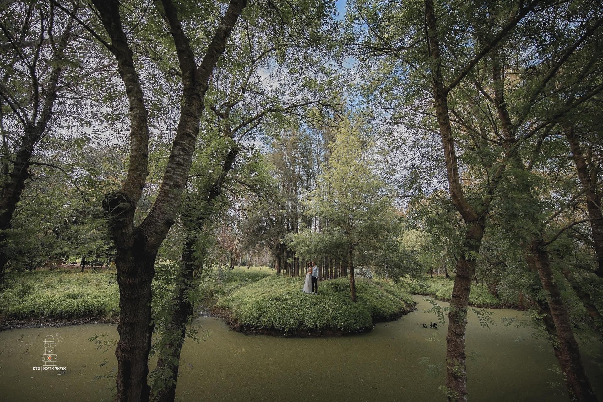 ירוק ומסתורי. יער אילנות | צילום: אריאל אריכא
