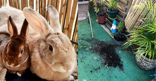 """""""בלתי נסלח"""". הגינה ההרוסה וזוג הארנבים שנמצאו מתים"""