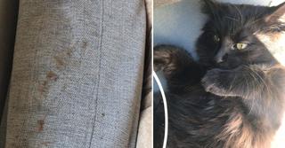 החתולה ג'ורג' וטביעות הנעליים שהתגלו בדירה | צילומים: פרטי