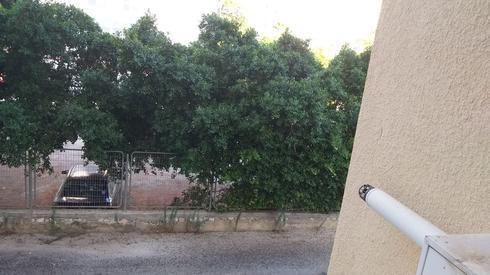 עטלפים מול רחוב קרן היסוד. (באדום, העיניים האדומות). צילום: פרטי