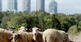 צילום המחשה: עיריית תל אביב